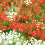 花のフリー(無料)背景、写真素材(ダウンロード01)