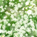 花のフリー(無料)背景、写真素材(ダウンロード02)