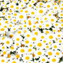花のフリー(無料)背景、写真素材(ダウンロード07)