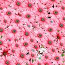 花のフリー(無料)背景、写真素材(ダウンロード08)