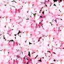 花のフリー(無料)背景、写真素材(ダウンロード09)