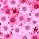 花の画像素材