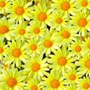 花のフリー(無料)背景、写真素材(ダウンロード11)