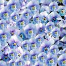 花のフリー(無料)背景、写真素材(ダウンロード13)