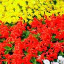 花のフリー(無料)背景、写真素材(ダウンロード14)