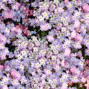 花のフリー素材(無料ダウンロード15)