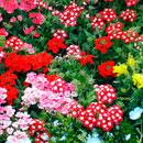 花のフリー(無料)背景、写真素材(ダウンロード17)