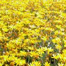 花のフリー(無料)背景、写真素材(ダウンロード19)