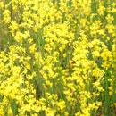 花のフリー素材(無料ダウンロード24)