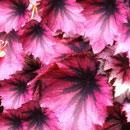花のフリー素材(無料ダウンロード25)