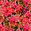 花のフリー素材(無料ダウンロード26)
