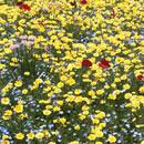 花のフリー(無料)背景、写真素材(ダウンロード27)