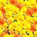 花のフリー(無料)背景、写真素材(ダウンロード28)