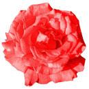 花のフリー(無料)背景、写真素材(ダウンロード29)