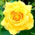 フリー素材(花の画像・写真素材)