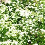花のフリー素材(無料ダウンロード32)