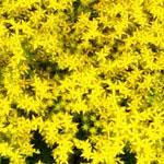 花のフリー(無料)背景、写真素材(ダウンロード33)