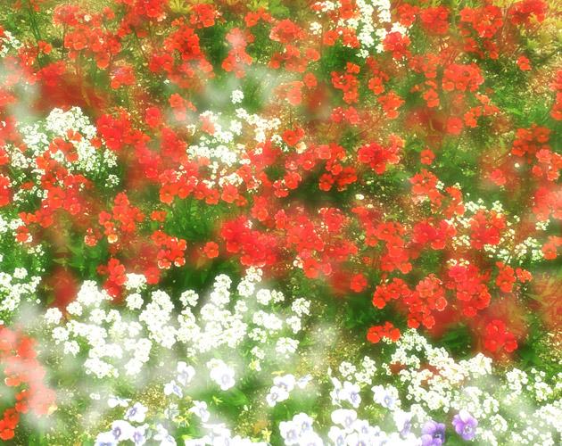 きれいな彩りの花の画像-01(フリー画像)