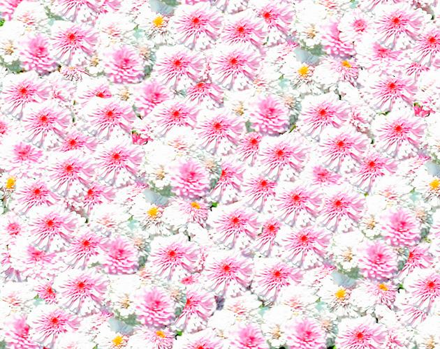 きれいな彩りの花の画像-06(フリー画像)