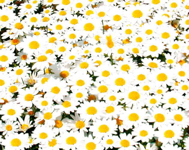 花や草花のフリー・無料写真(ダウンロード07)