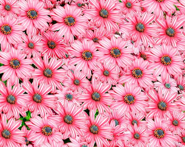 きれいな彩りの花の画像-08(フリー画像)