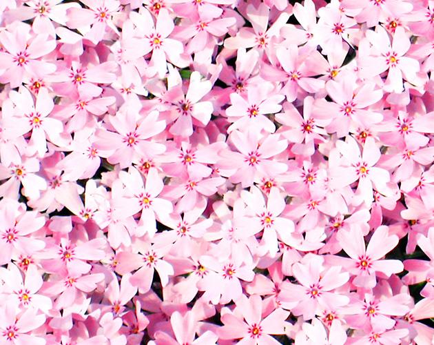 花や草花のフリー・無料写真(ダウンロード09)
