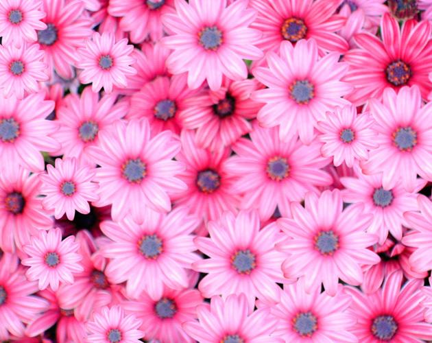 きれいな彩りの花の画像-10(フリー画像)