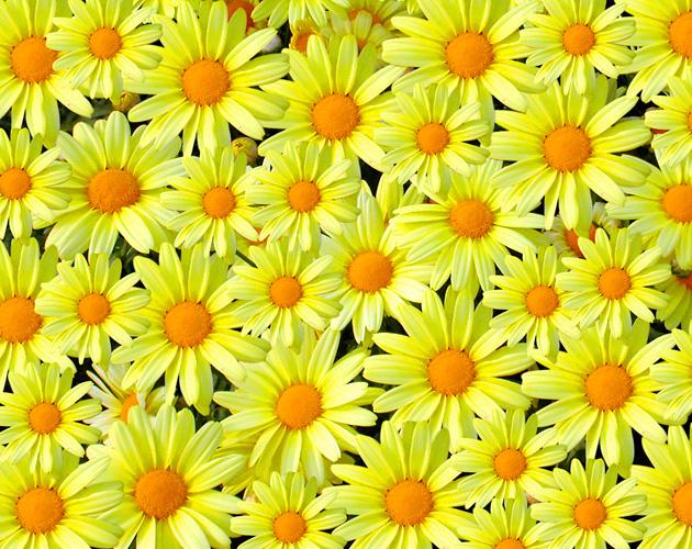 花や草花のフリー・無料写真(ダウンロード11)