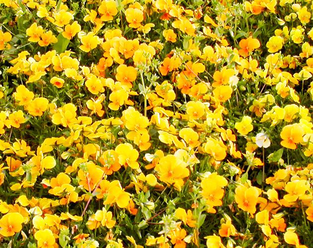 きれいな彩りの花の画像-12(フリー画像)
