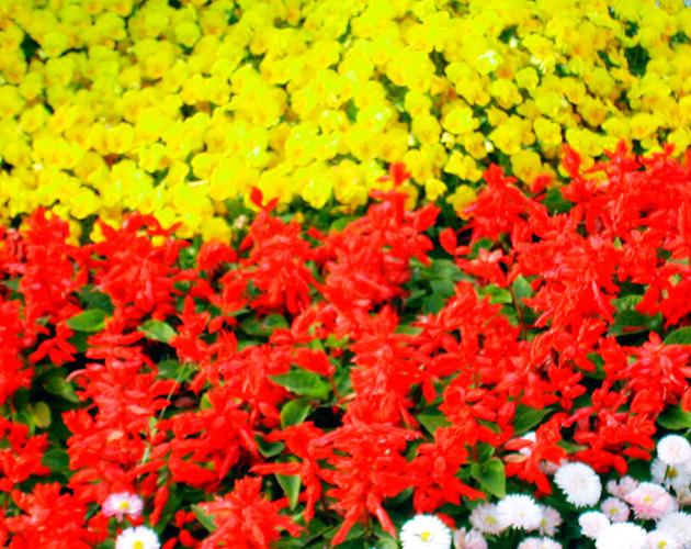 きれいな彩りの花の画像-14(フリー画像)