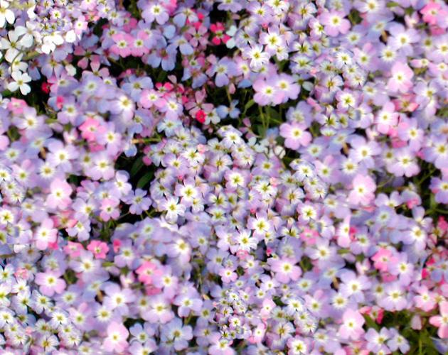 花や草花のフリー・無料写真(ダウンロード15)