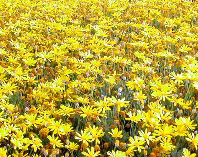 花や草花のフリー・無料写真(ダウンロード19)