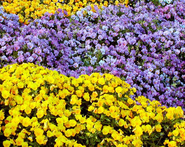 花や草花のフリー・無料写真(ダウンロード20)