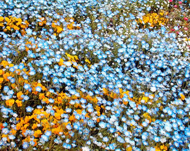 花や草花のフリー・無料写真(ダウンロード21)