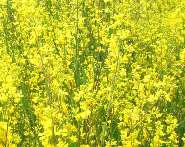 花や草花のフリー・無料写真(ダウンロード22)