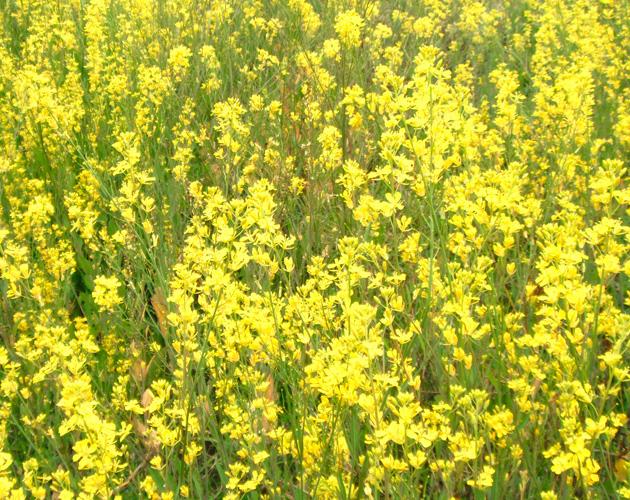 花や草花のフリー・無料写真(ダウンロード24)
