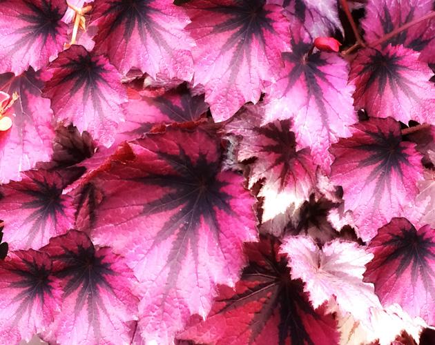きれいな彩りの花の画像-25(フリー画像)