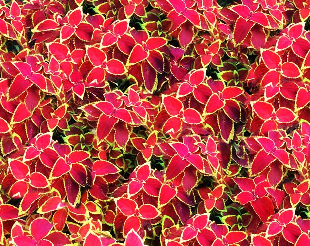 きれいな彩りの花の画像-26(フリー画像)