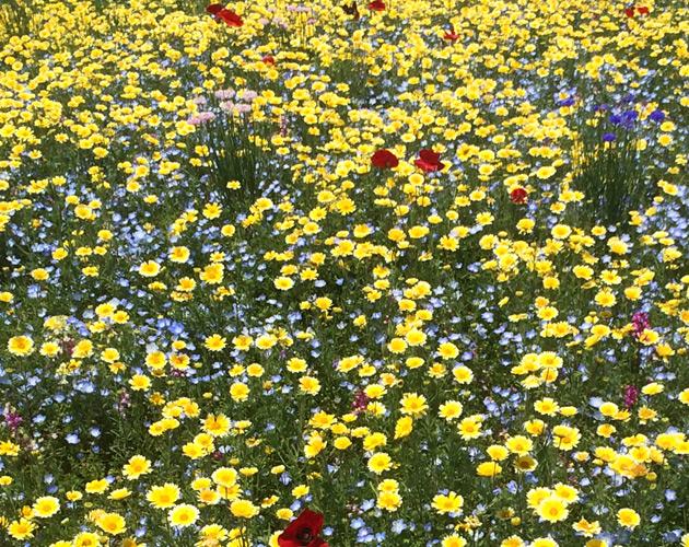 きれいな彩りの花の画像-27(フリー画像)