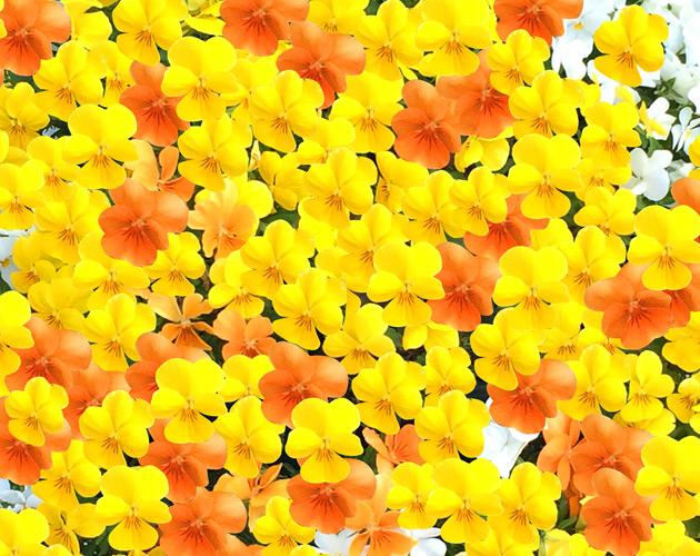 花や草花のフリー・無料写真(ダウンロード28)