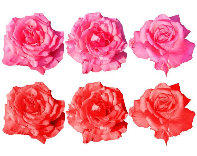 きれいな彩りの花の画像-29(フリー画像)