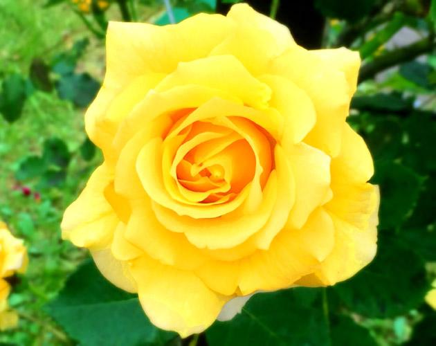 花や草花のフリー・無料写真(ダウンロード30)