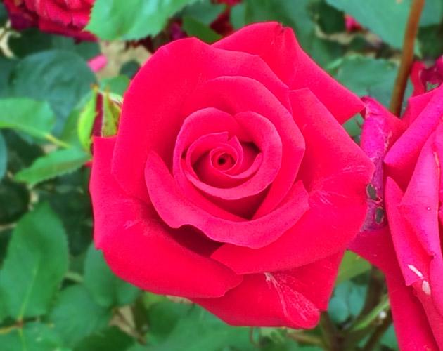 きれいな彩りの花の画像-31(フリー画像)