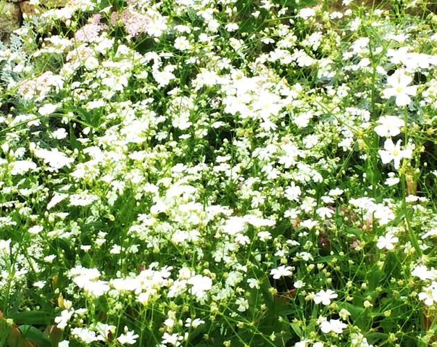 きれいな彩りの花の画像-32(フリー画像)