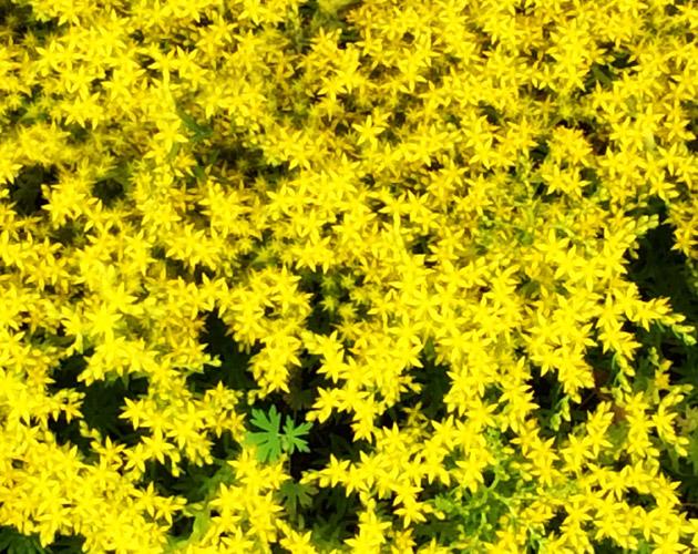 花や草花のフリー・無料写真(ダウンロード33)