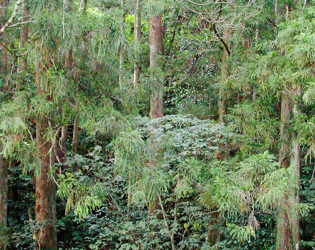 自然・風景のフリー背景素材、写真画像(ダウンロード03)