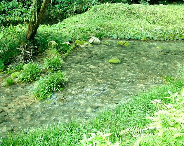 自然・風景のフリー背景素材、写真画像(ダウンロード04)