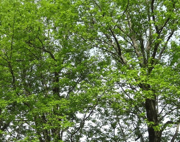 自然・風景のフリー背景素材、写真画像(ダウンロード05)