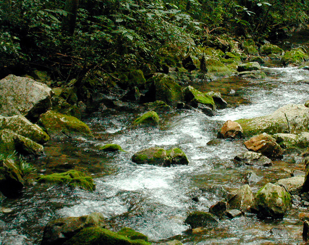 自然・風景のフリー背景素材、写真画像(ダウンロード06)