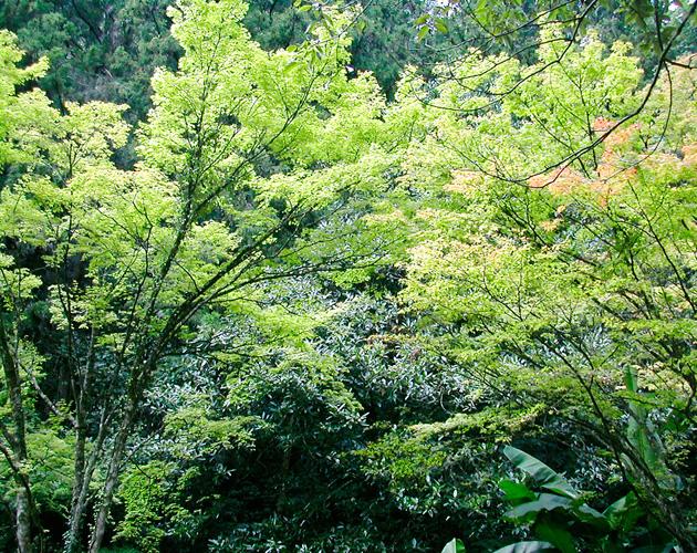 自然・風景のフリー背景素材、写真画像(ダウンロード08)